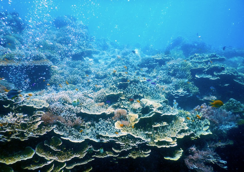 サンゴ礁写真素材